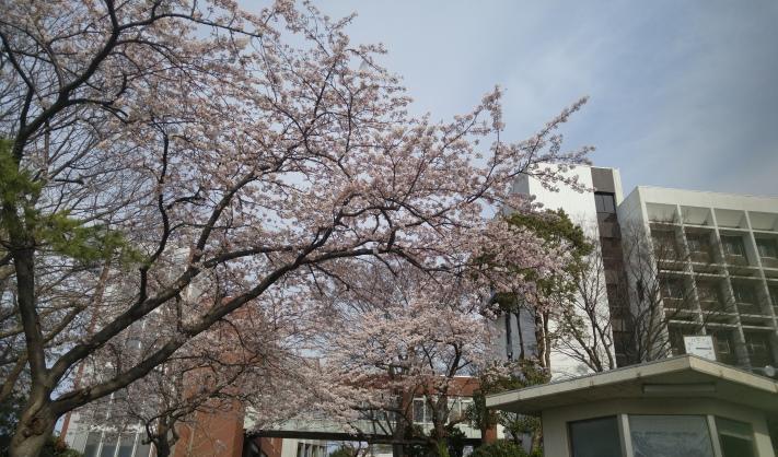 桜・校舎20160331_711×418