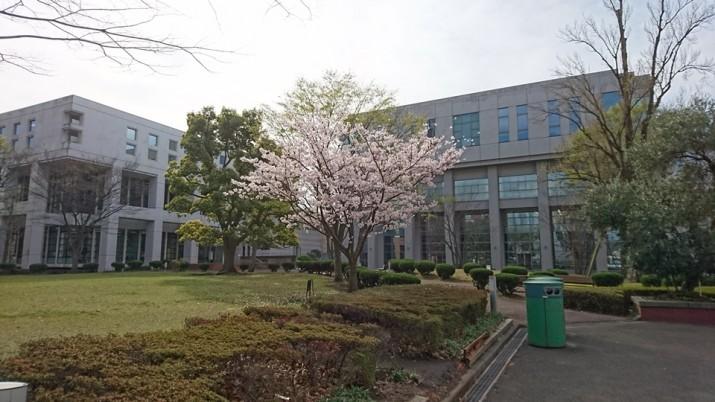 桜1_960×540